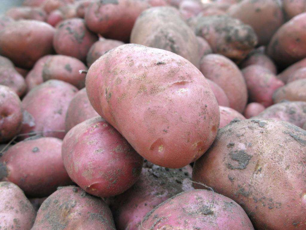 картошка хозяюшка