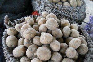 Описание и характеристика картофеля сорта Рогнеда, посадка и уход