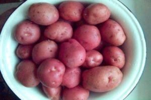 Описание сорта картофеля Романо, особенности посадки и ухода