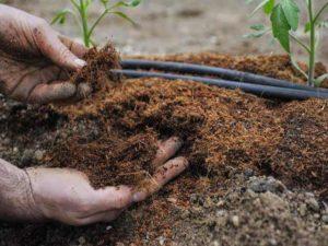 Как применять и приготовить навоз как удобрение, его виды и состав