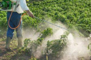 Инструкция по применению гербицидов для картофеля, препараты-аналоги
