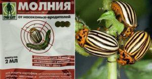 Инструкция по применению средства от колорадского жука Молния