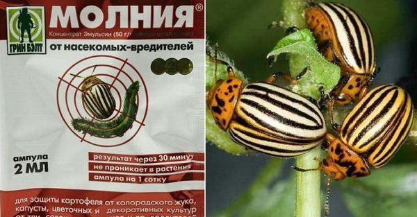 средство против жуков