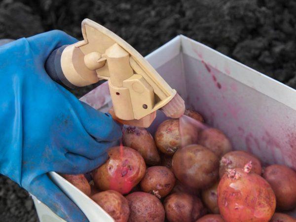 обработка картофеля в ящике