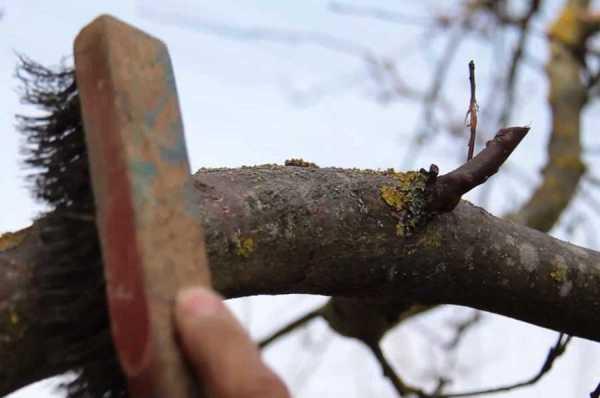 зачистка дерева