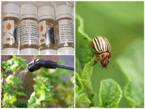 Инструкция по применению отравы от колорадского жука «Палач»