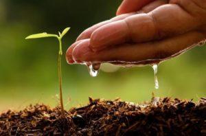 Как в домашних условиях можно вырастить яблоню из семечка, посадка и уход