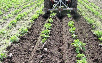 окучивания картошки