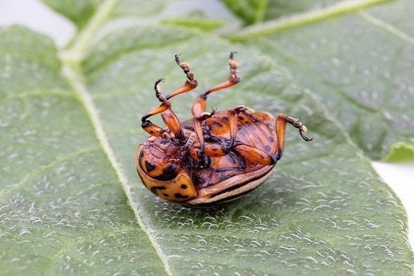 травления жуков