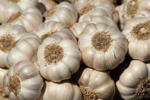 Описание и выращивание китайского чеснока, выращивание и уход