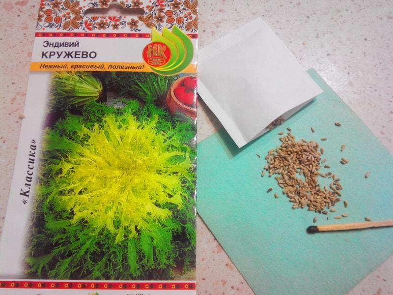 семена цикория салатного