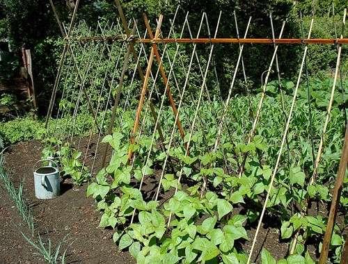 способ выращивание