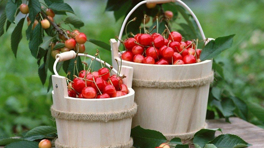 сладкая вишня