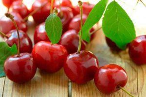 20 лучших сортов вишни для средней полосы с описанием и характеристиками