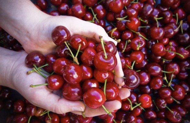 вишни польза и вред