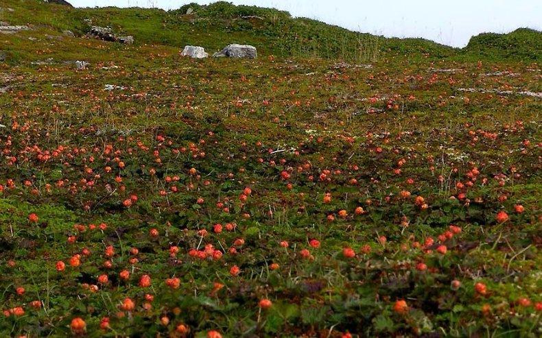 уход за ягодами