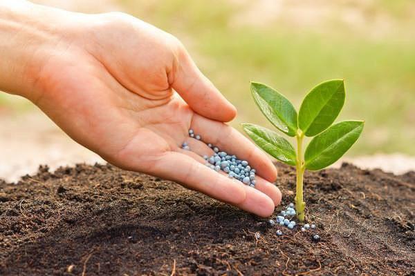 фунгициды для растение