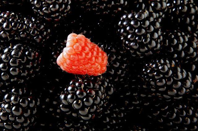 малина черноплодная