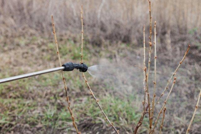 обработка куста горячей водой