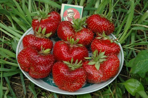 ягода крупная