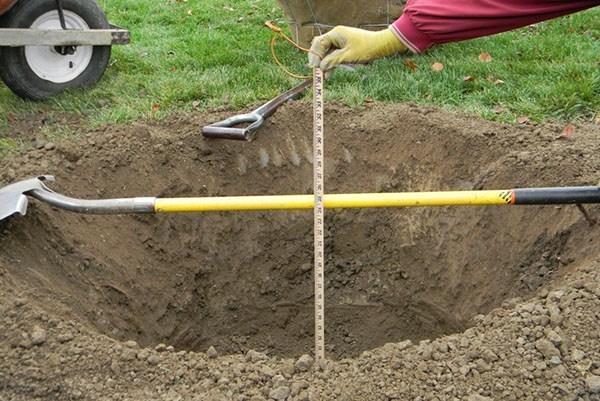 подготовка ямы к посадки
