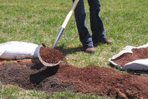 почва для посадки ежевики