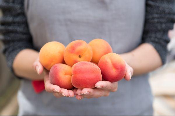 абрикосы в руках