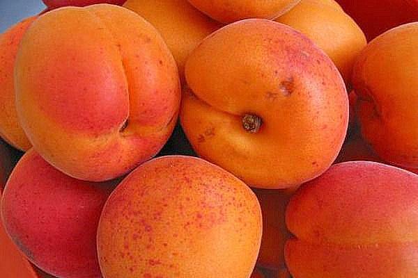 абрикос медовый