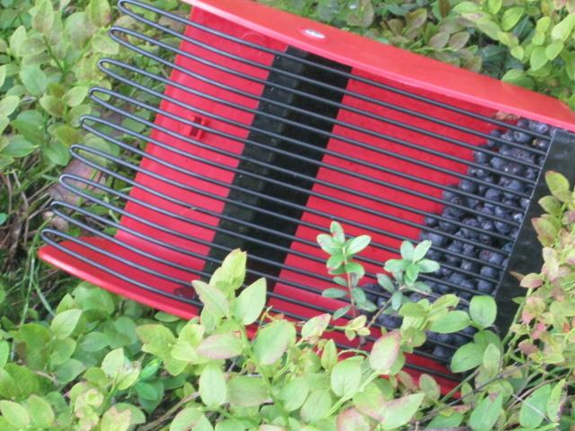 способы уборки ягод