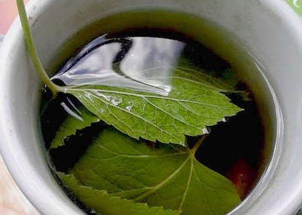 настойка из листьев