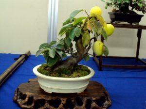 Правила и способы выращивания манго из косточки в домашних условиях