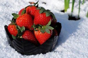 Как правильно подготовить клубнику к зиме, чем обработать и укрыть