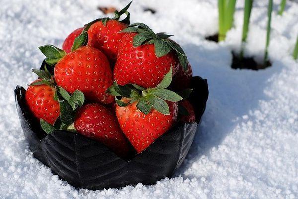 клубника зимой