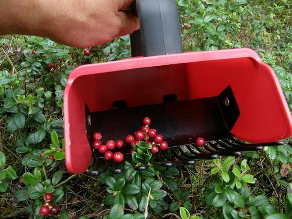 приспособление для уборки ягод