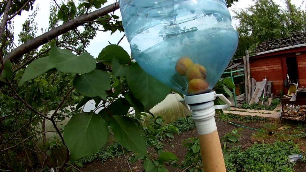 приспособление для уборки абрикос