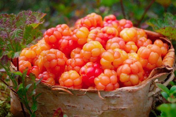 ягода морошка