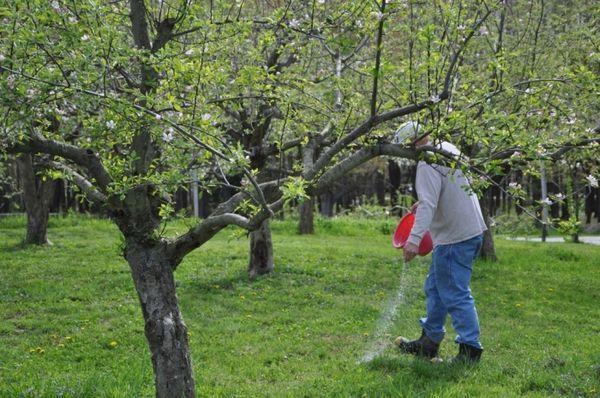 удобрение яблонь