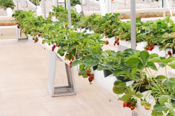 технология выращивание