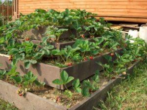 Как сделать пирамиду для выращивания клубники своими руками с размерами