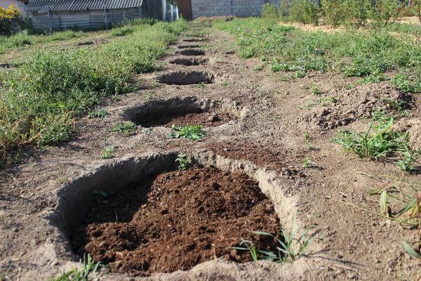 защита корневой системе