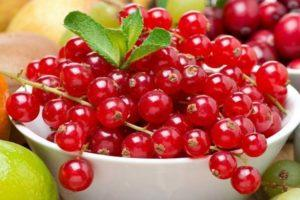 Описание и выращивание гибрида вишни и черемухи, сорта церападуса