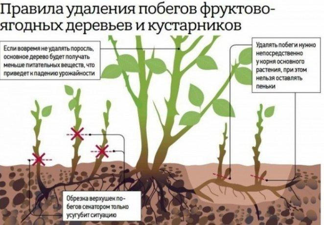 удаление побегов деревьев