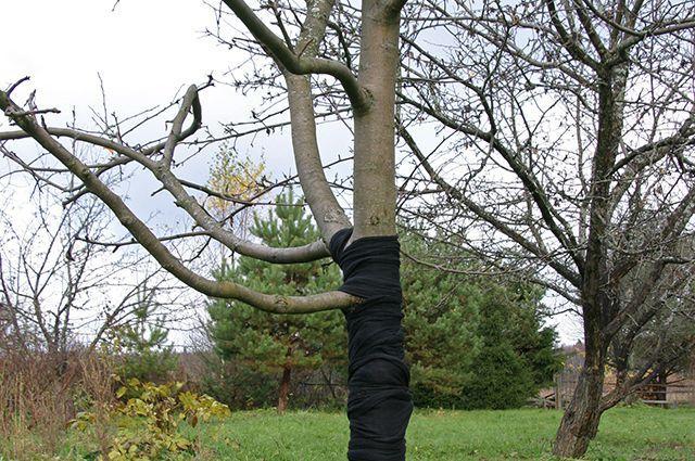 борьба и защита дерева
