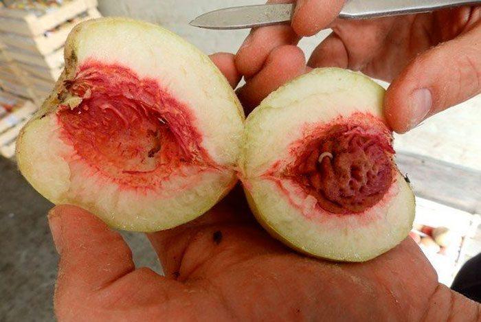 вредители персика