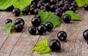 Описание и характеристики сорта смородины Лентяй, посадка и уход