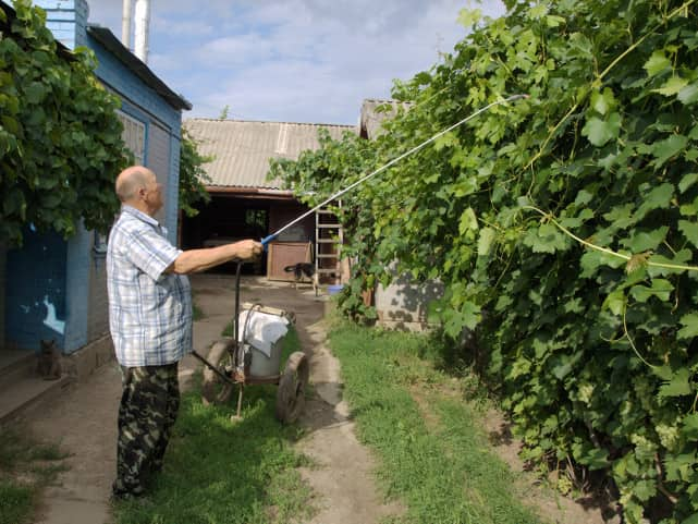 полив винограда на даче