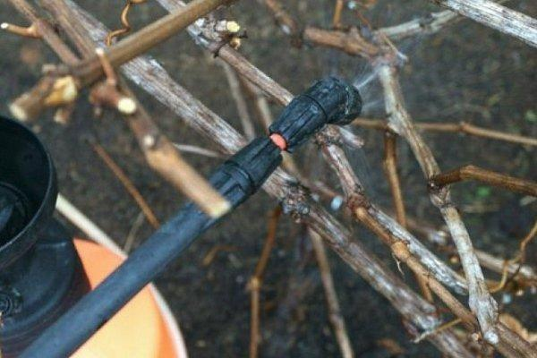 влажная обработка винограда