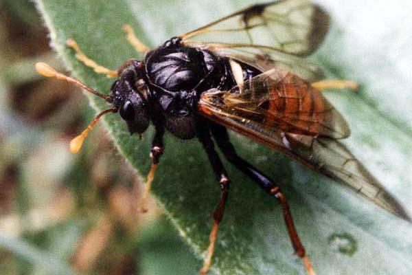 насекомое вредитель