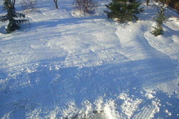 покрыты снегом