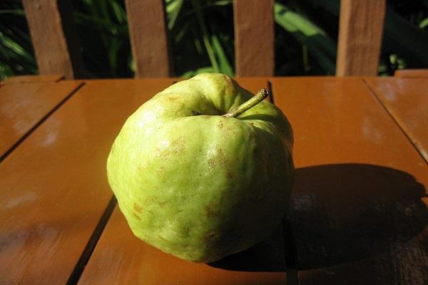 сморщенный плод